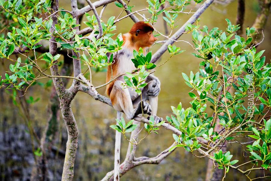 Malesia_Borneo_luonto_03