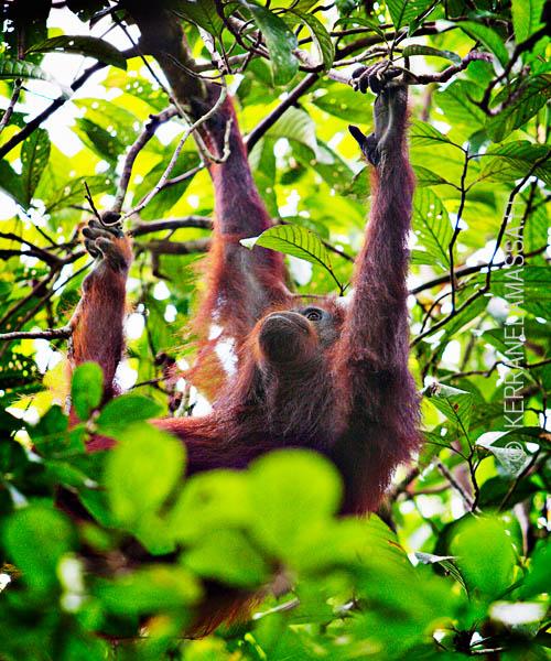 Malesia_Borneo_luonto_10