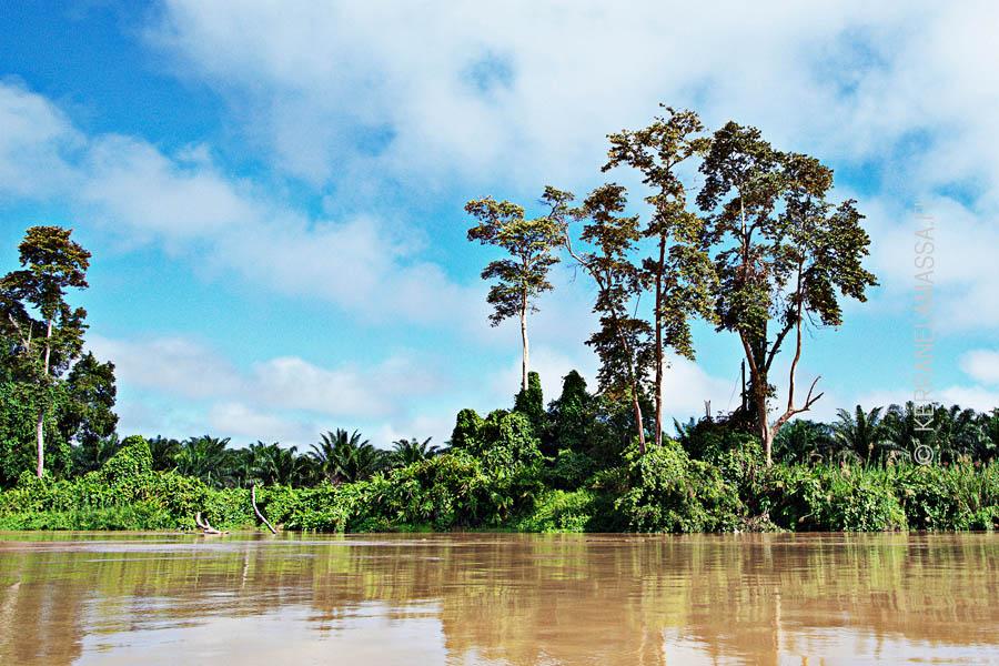 Malesia_Borneo_luonto_11