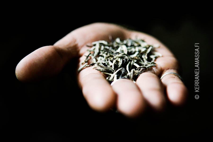 Darjeeling tea India