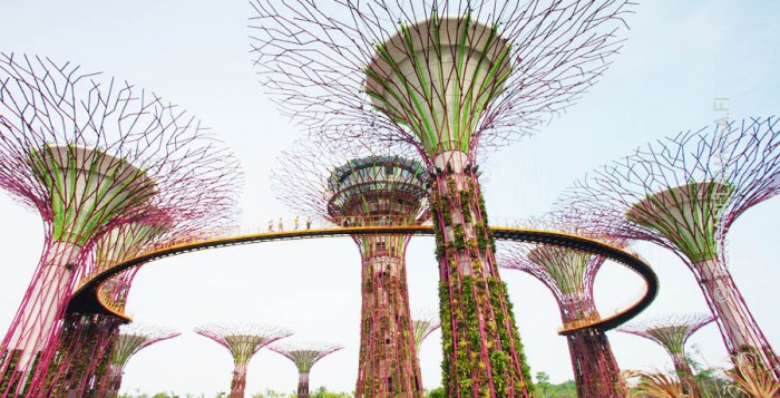 Singapore superpuut