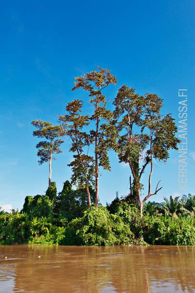 Borneo_Malesia_Palonen_17