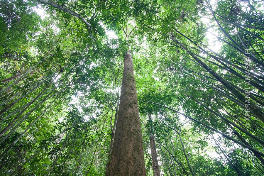 thaimaa-sademetsa