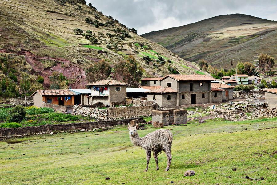 Peru_perunat_01