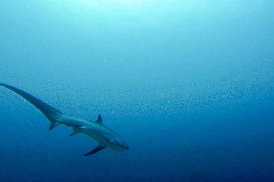 malapascua-sukellus