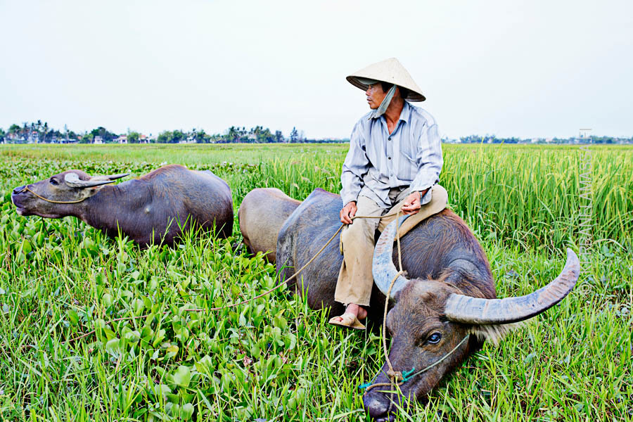 Vietnam_Hoi_An_13