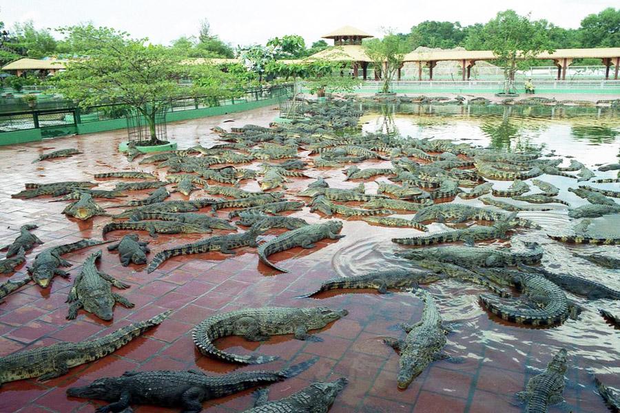Mitäköhän huvipuiston krokotiilit tuumivat buddhalaisuuden perusteista? Kuva: Don Fulano, Flickr CC