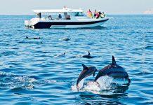 Oman delfiiinit