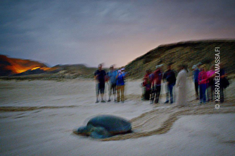 Ras-al-Jinzissä näkee takuuvarmasti kilpikonnia munimassa.