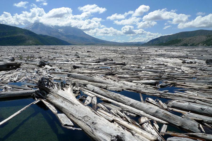 Spirit Laken pinnalla kelluu tukkeja, jotka megatsunami kaatoi vuoren rinteiltä. Kuva: Tom Byrne, Flicrk CC
