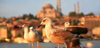 kultainen-sarvi-istanbul