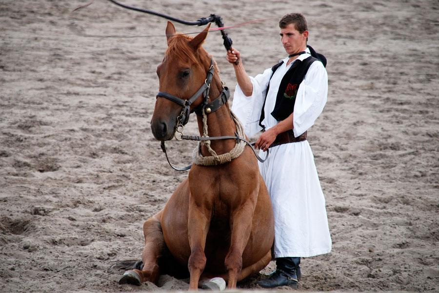 Pustan paimenet ovat opettaneet hevosilleen temppuja kuten istumisen.