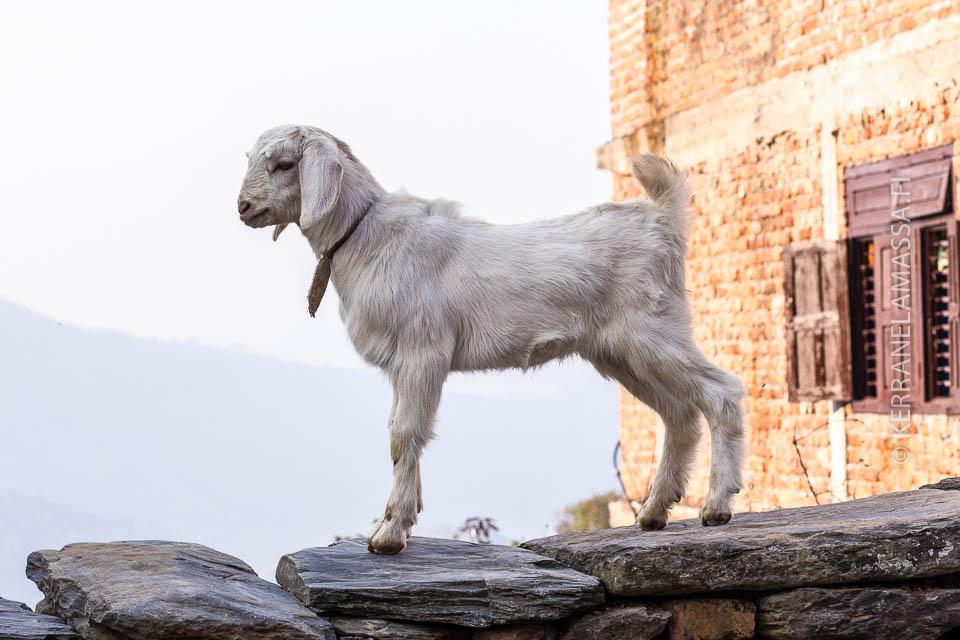 Nepal-bandipur