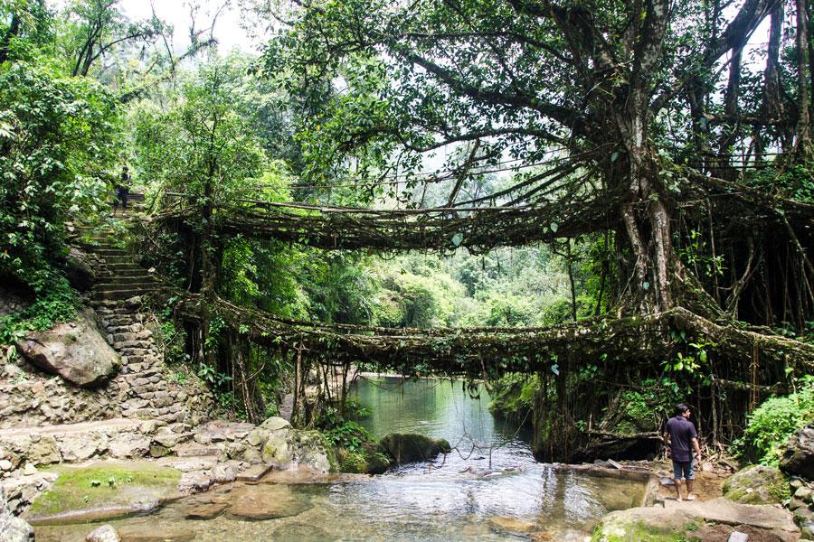 Kaksikerroksinen juurisilta. Kuva: Ashwin Kumar, Flickr CC