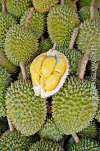Terengganu_Malesia_09