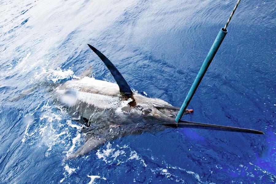Madeira kalastus