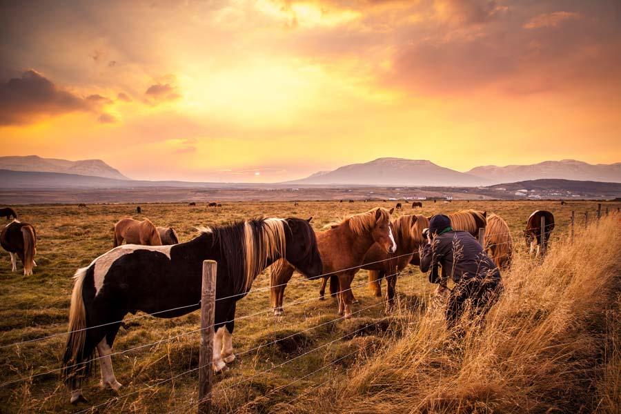 Valmiina ratsastamaan. Kuva: Andrés Nieto Porras, Flickr CC