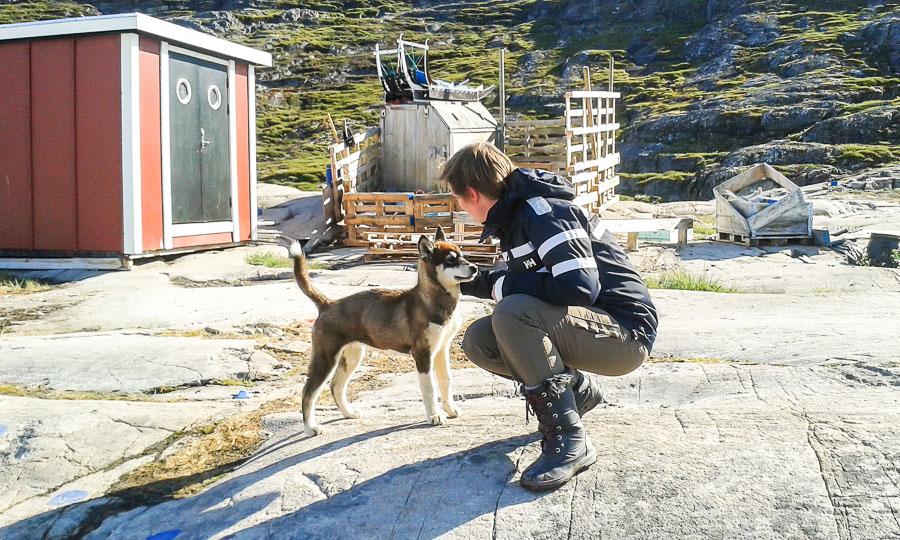Husky-koirat kuuluvat Grönlannin sympaattisiin asukkaisiin.