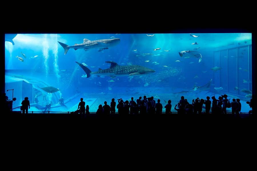 japani-okinawa-akvaario