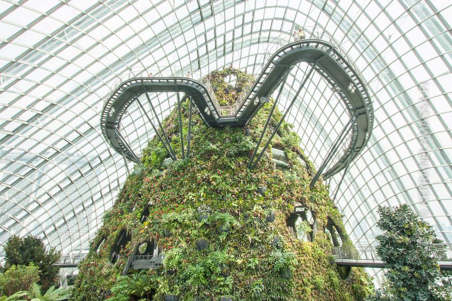 Gardens by the Bay -kasvititieteellisen puutarhan lasikuvun alla kohoaa pilvisademetsä.