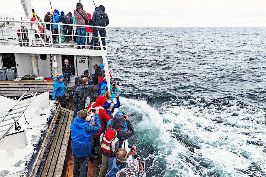 lofootit valas safari laiva