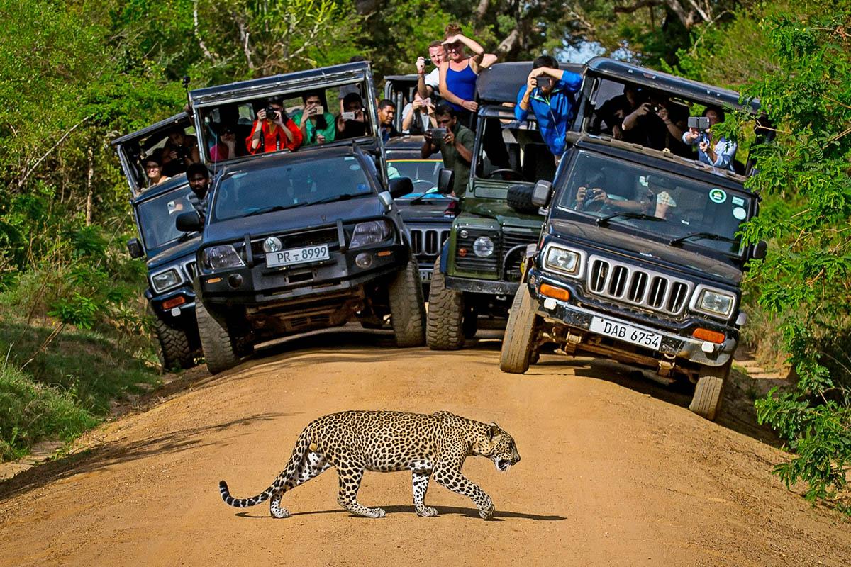 Sri Lanka Yala kansallispuisto leopardi safari