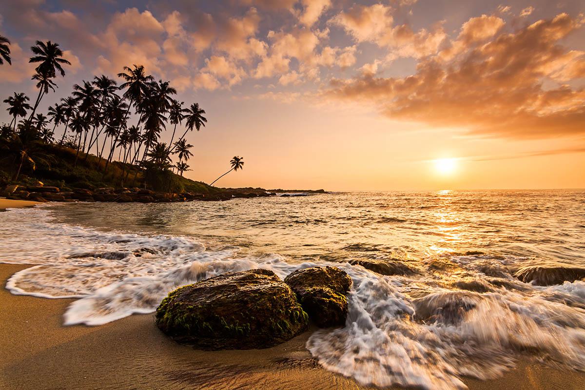 sri lanka hiekkaranta palmut