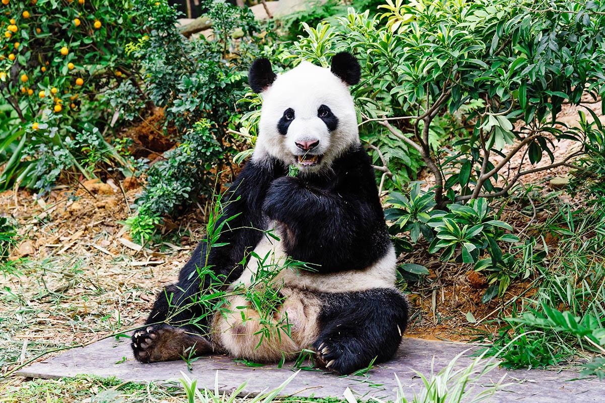Singapore Zoo eläintarha