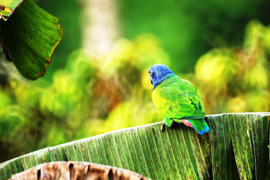Kolumbia linnut
