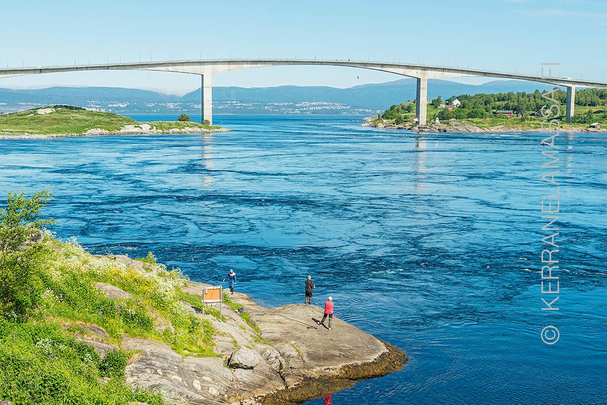 Norja saltstraumen silta kalastus