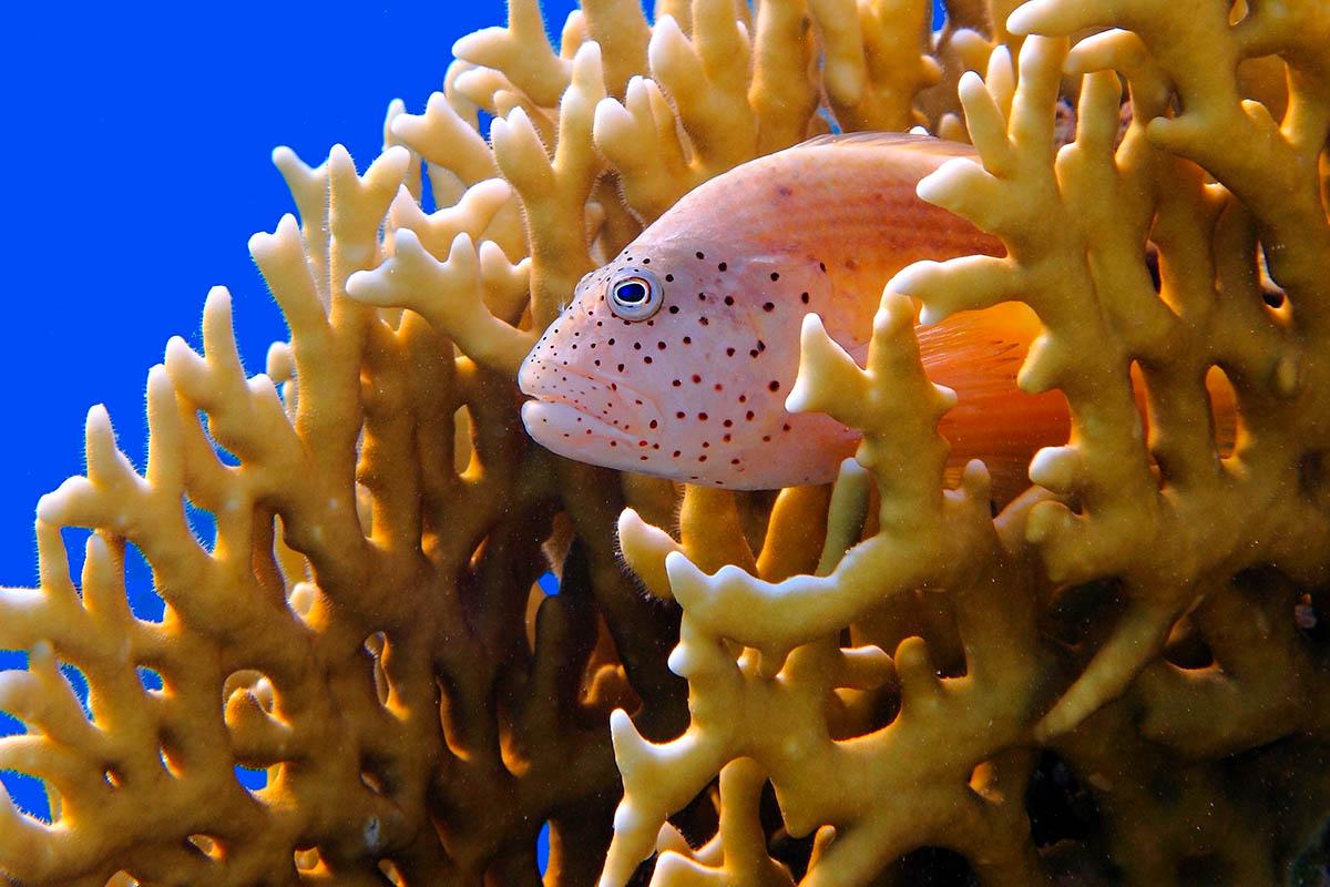 egypti punainenmeri sukellus