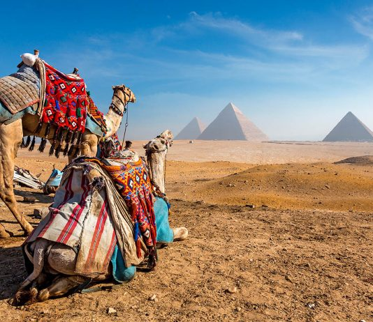 egypti kameli pyramidi giza