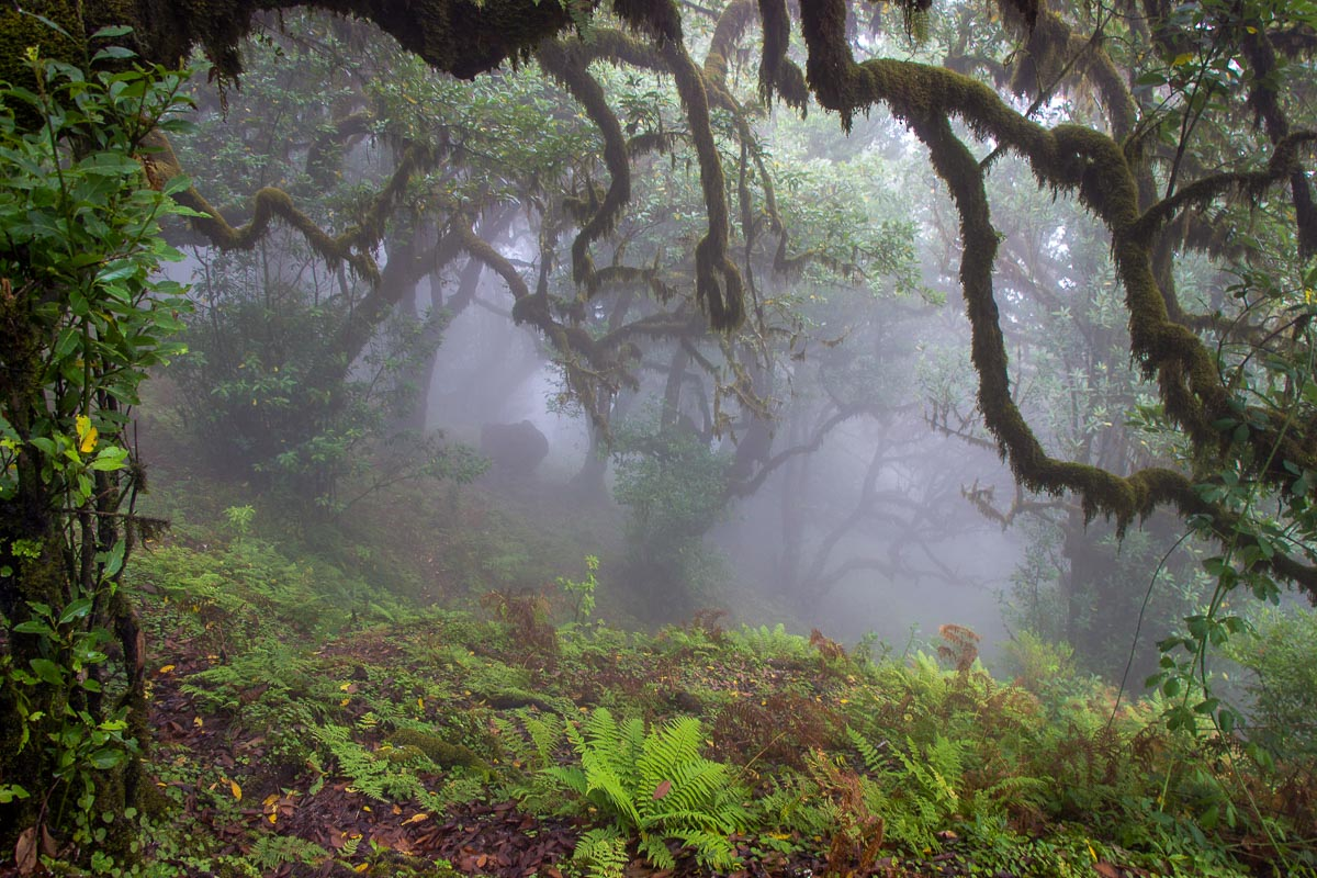 laurisilva Madeira