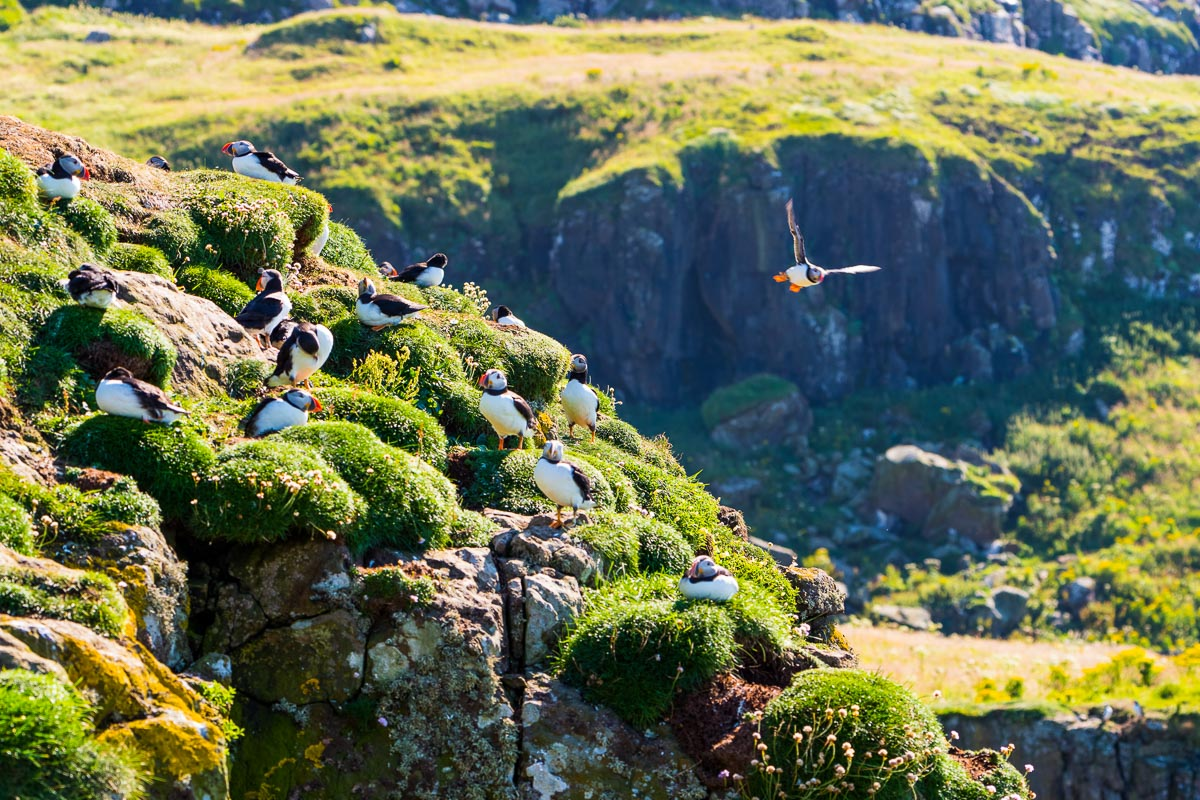 Skotlanti Mull