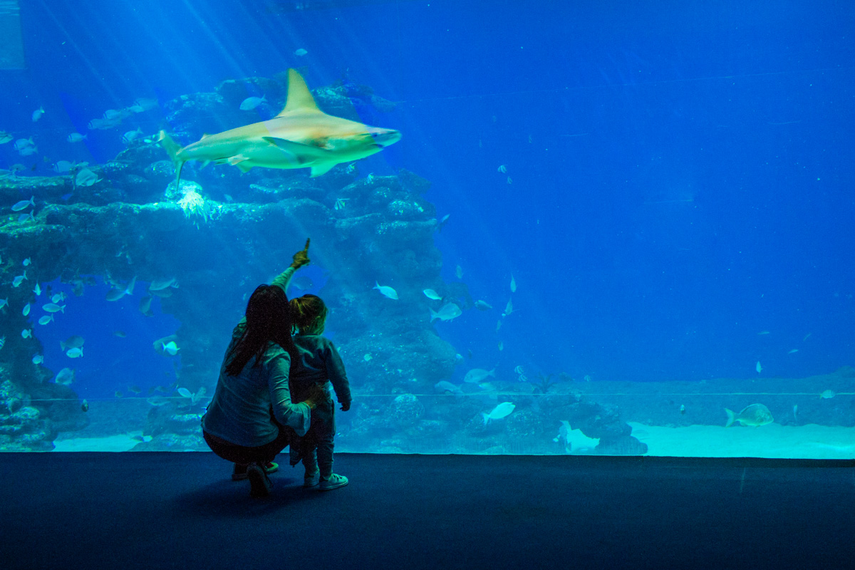 Eilat akvaario