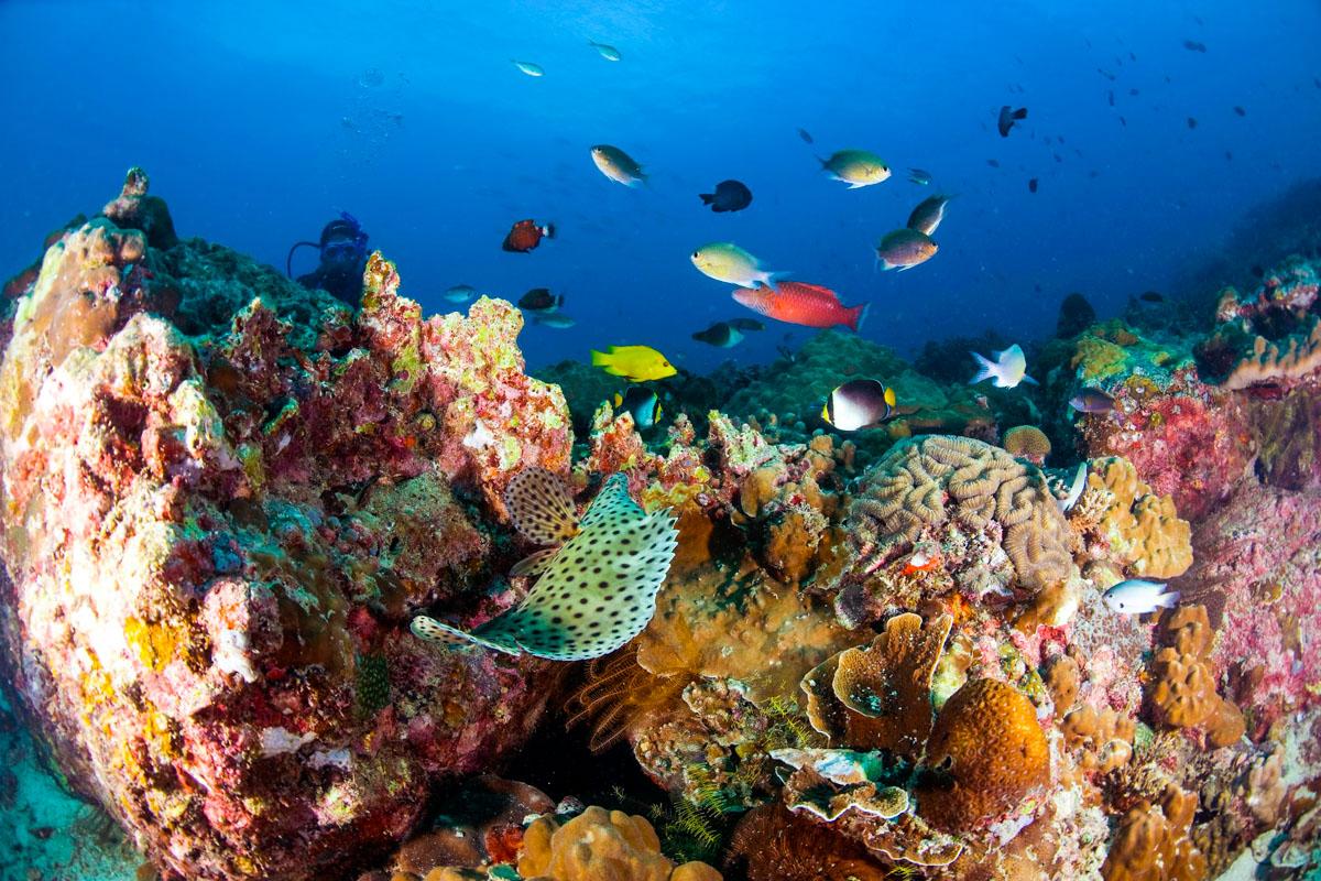 Pulau Tioman snorklaus