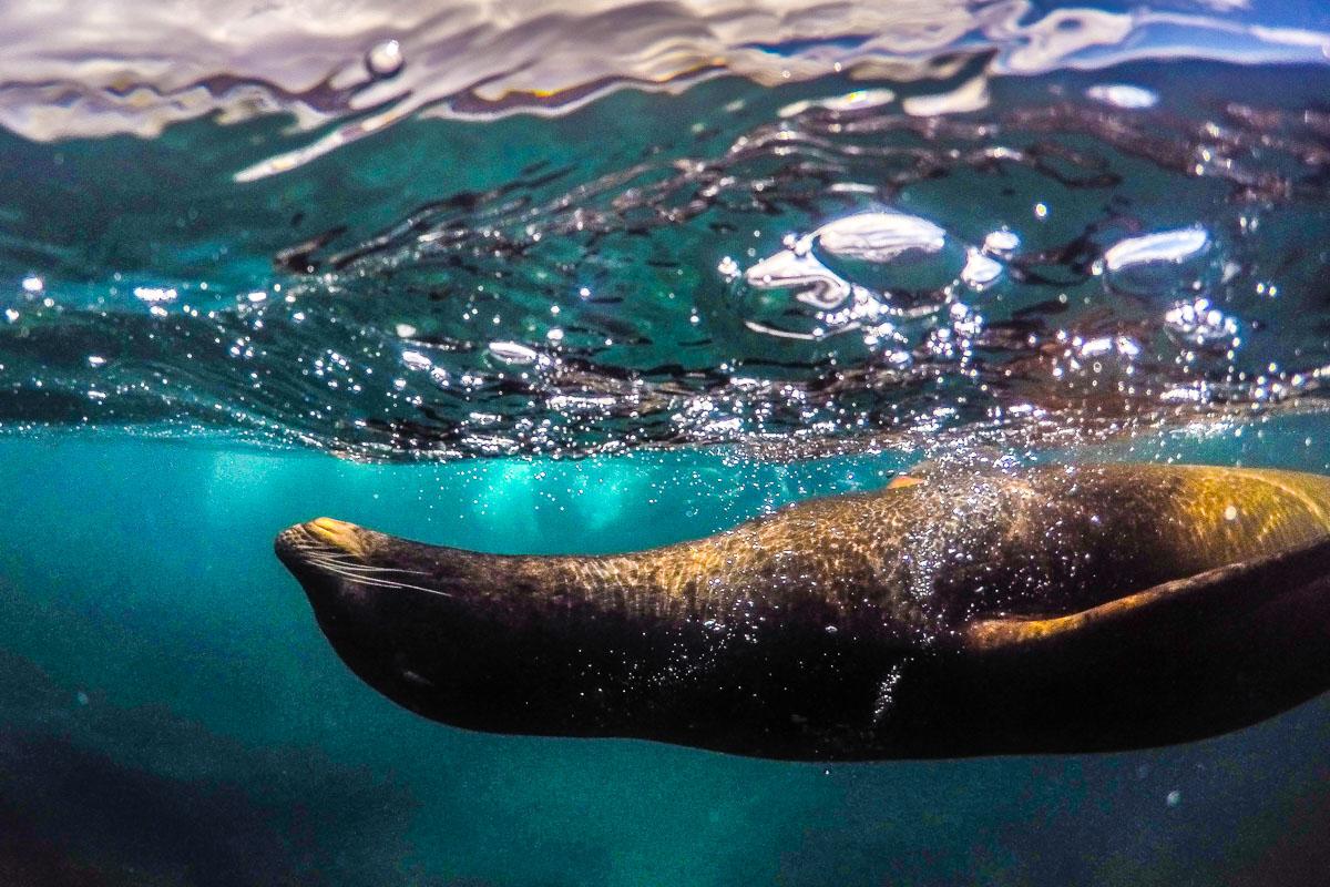 Galapagos hylje
