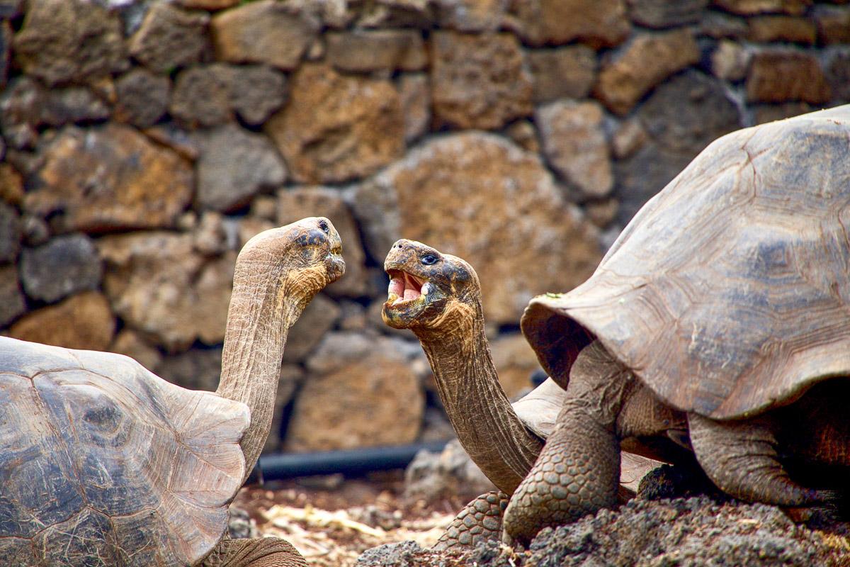 Galapagos kilpikonnat