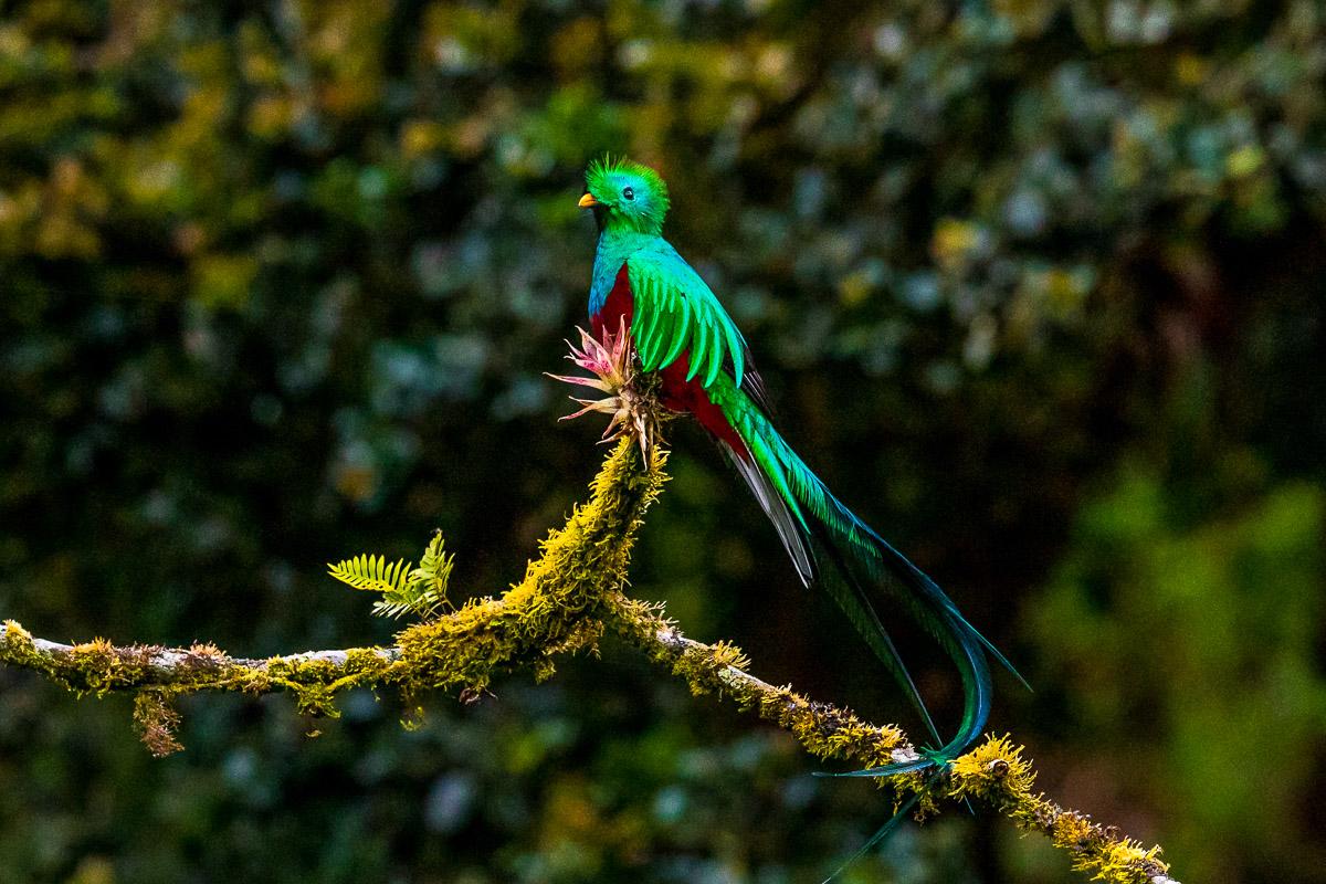 maailman kaunein lintu