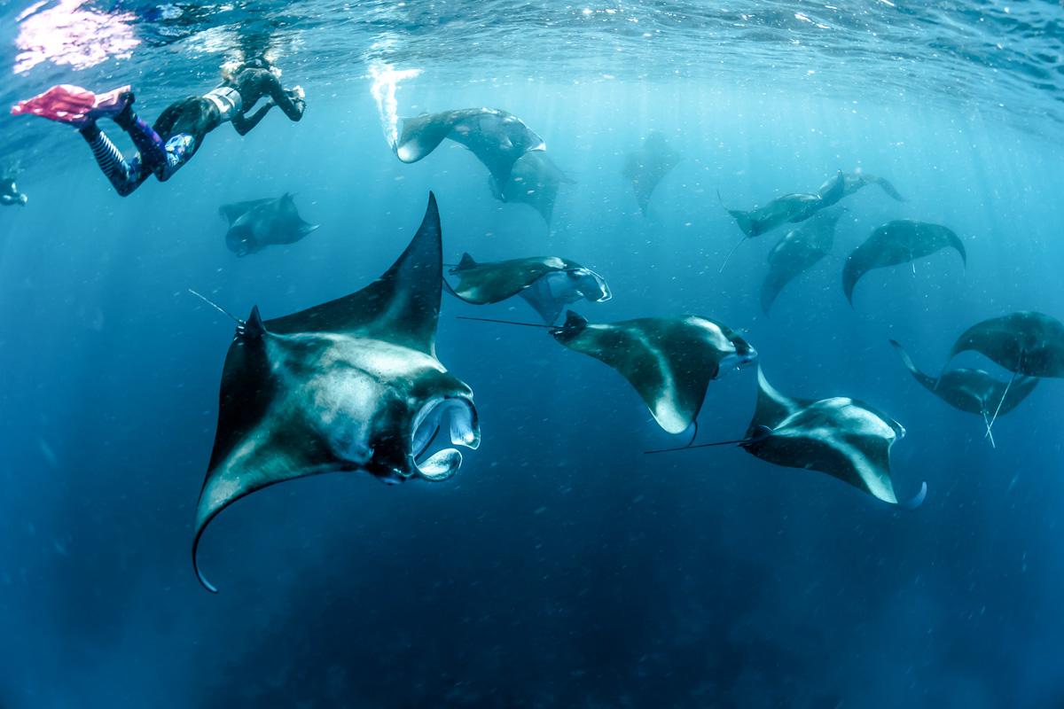 Malediivit Hanifaru Bay