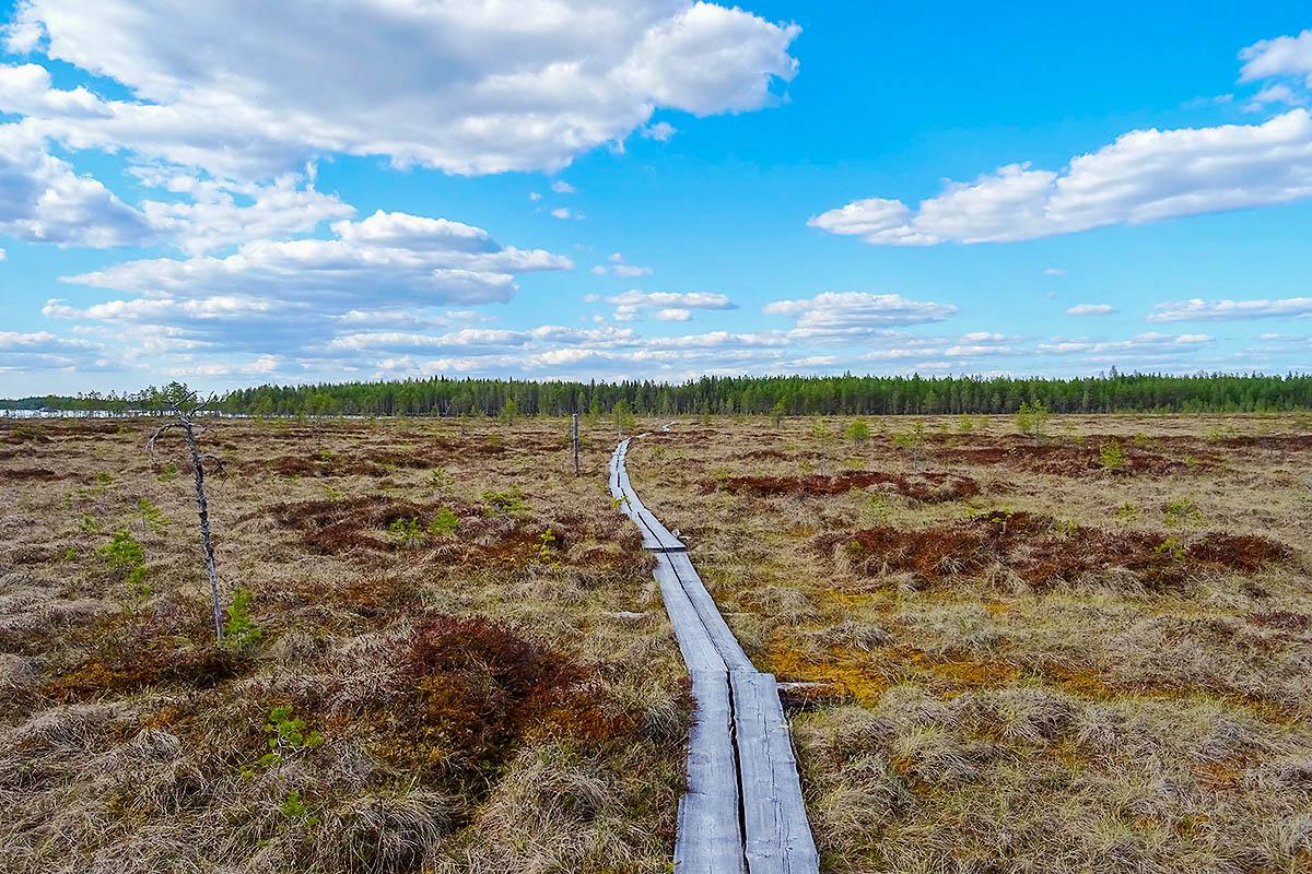 Taiga Metsä