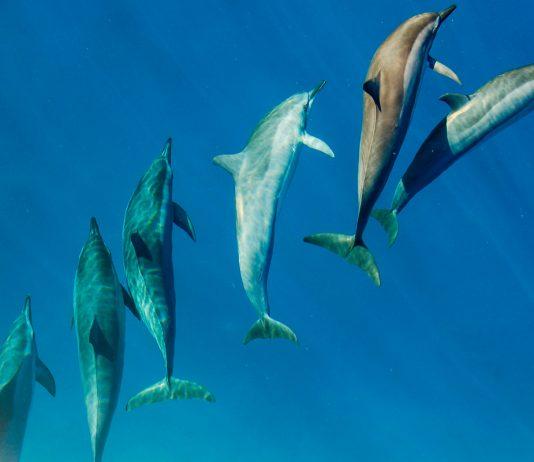 ui delfiinien kanssa