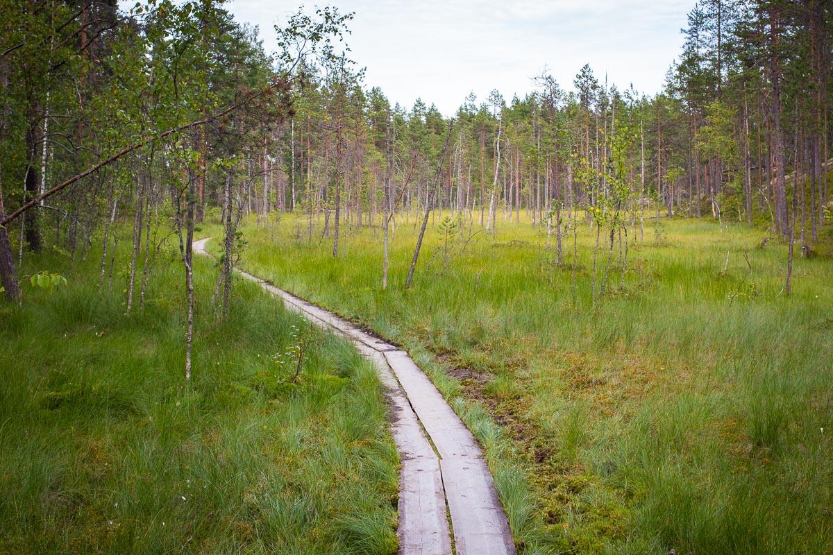 Helvetinjärven kansallispuisto suo