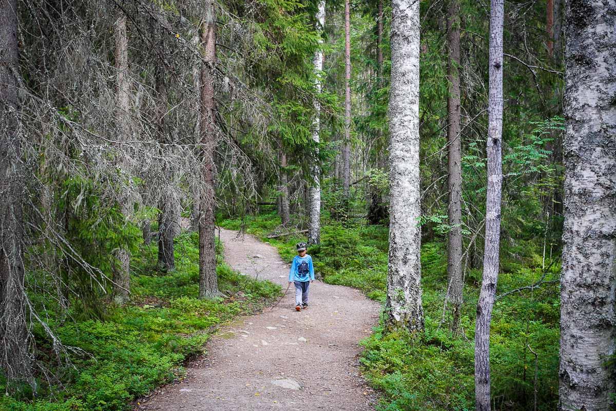 Helvetinjärvi metsä