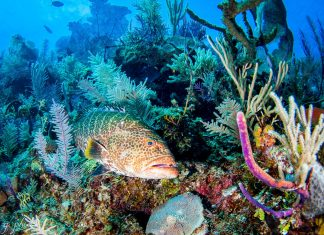 Maailman parhaat sukelluskohteet