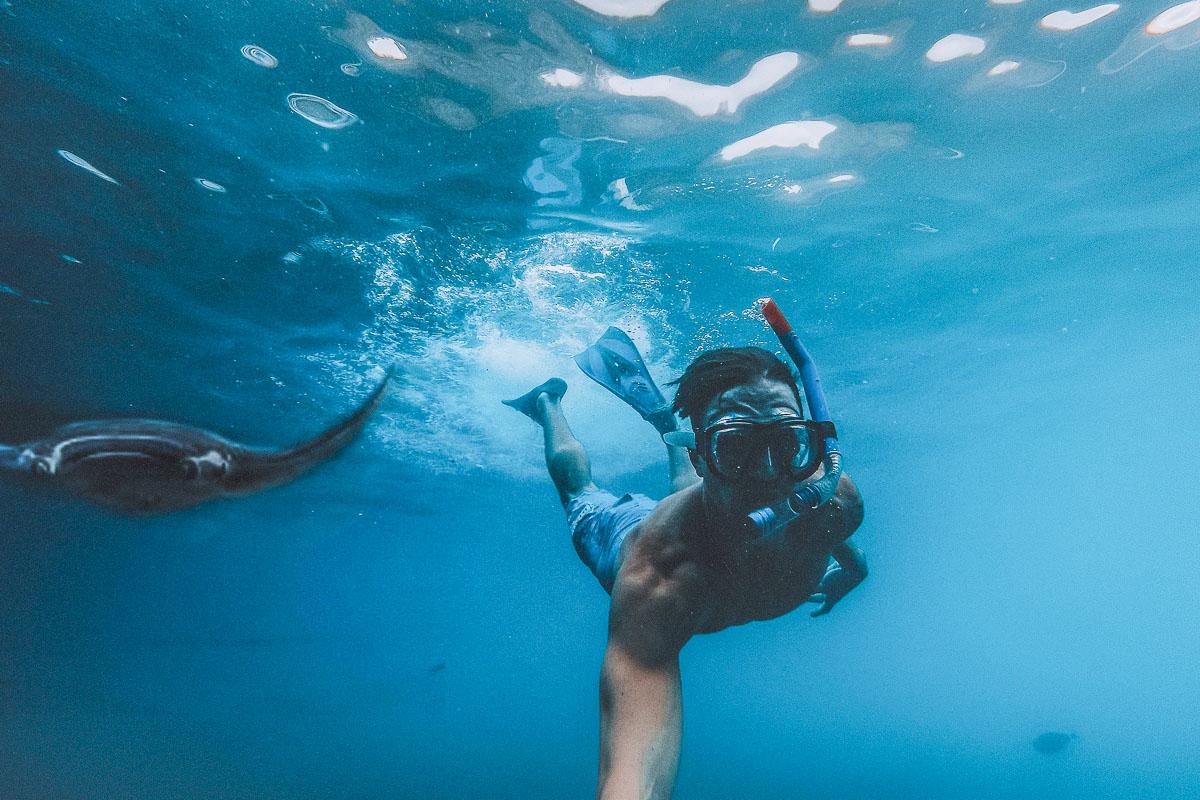 snorklaus manta ray