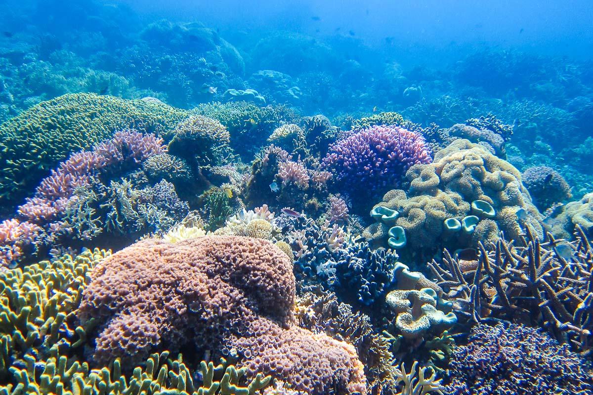 Itä-Timor sukellus